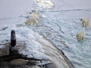 polar bears check out sub
